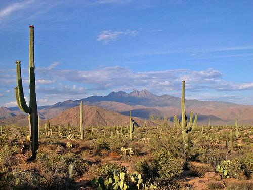 arizona desert 1218 Nod Your Head: My Blood Runs Copper: My Newfound Admiration for Arizonas Music Scene