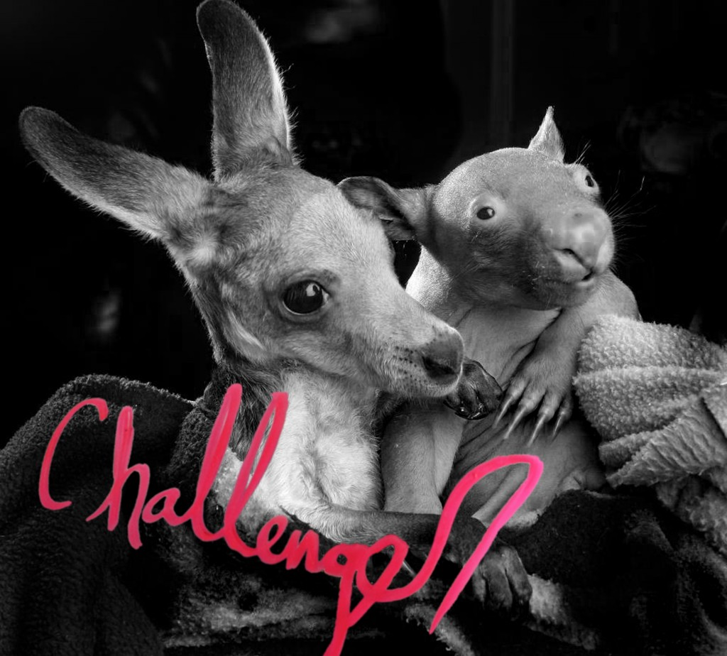 challenegerlpcover 1024x924 Stream: Challenger   The World Is Too Much For Me (CoS Premiere)