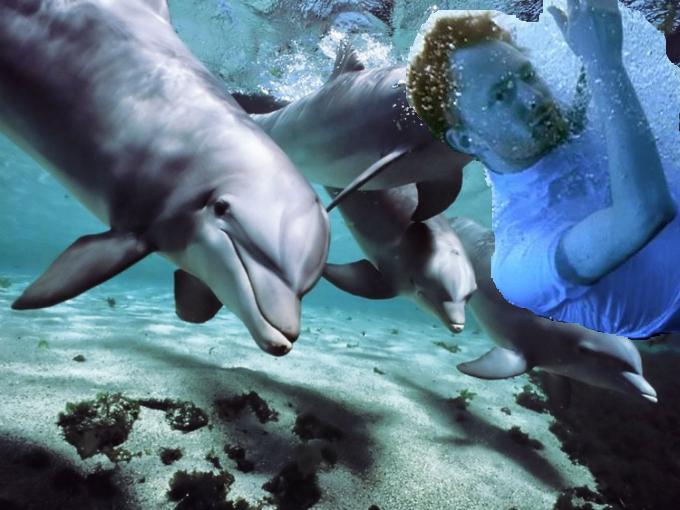 dolphinyorke1 Dolphins love Radiohead