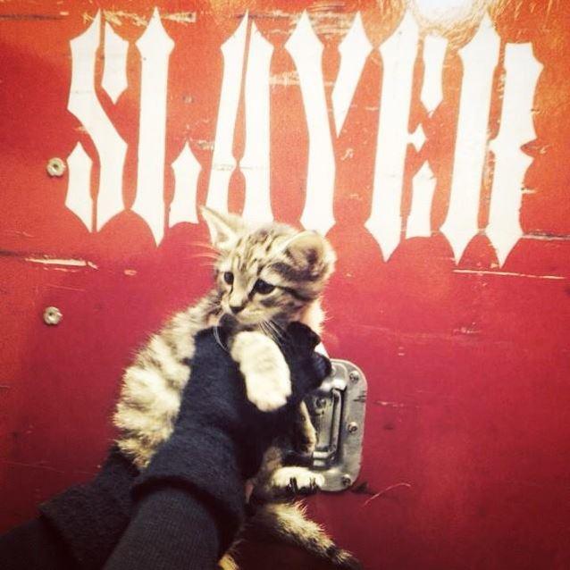 slayer cat