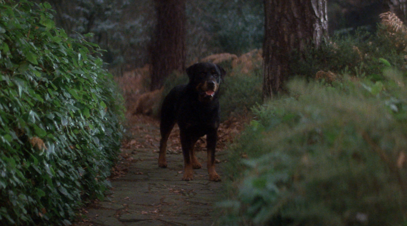 demon dog omen1 The 101 Greatest Dogs in Film History