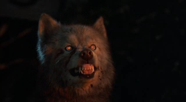 pet sematary 2 dog The 101 Greatest Dogs in Film History