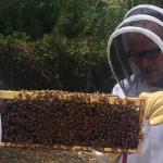 Flea Beekeeper