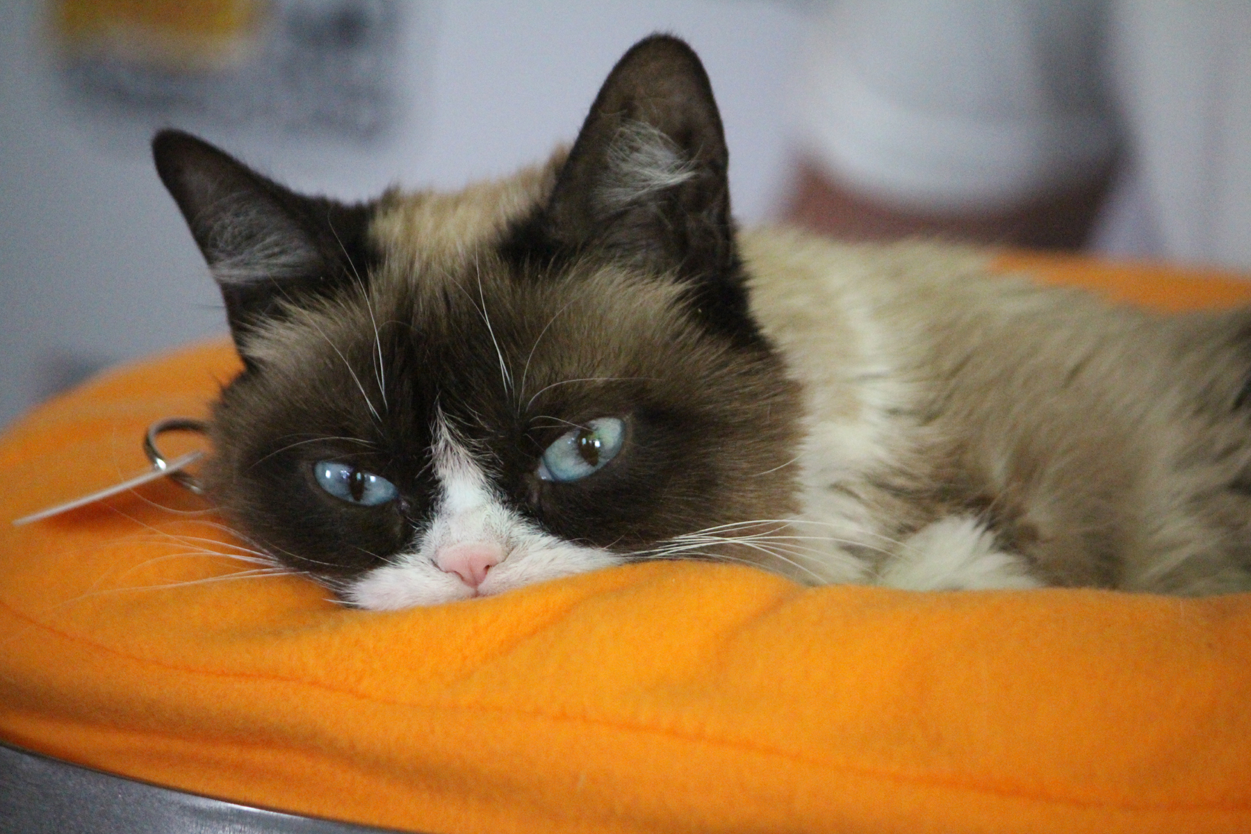 Grumpy Cat // Photo by Heather Kaplan