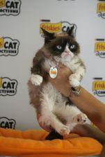 Grumpy Cat // Photo by Heather Kaplan