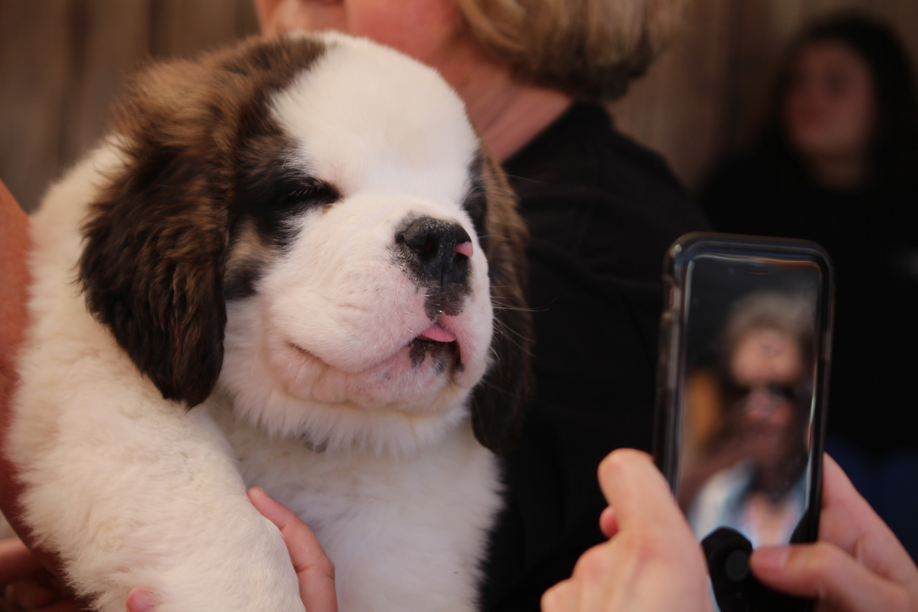 Mophie St. Bernards // Photo by Heather Kaplan