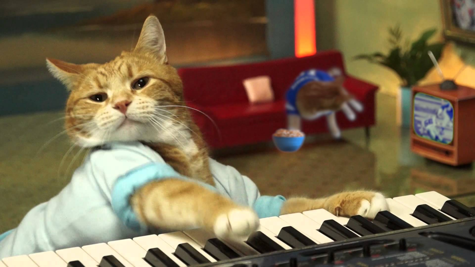 Bento the Keyboard Cat