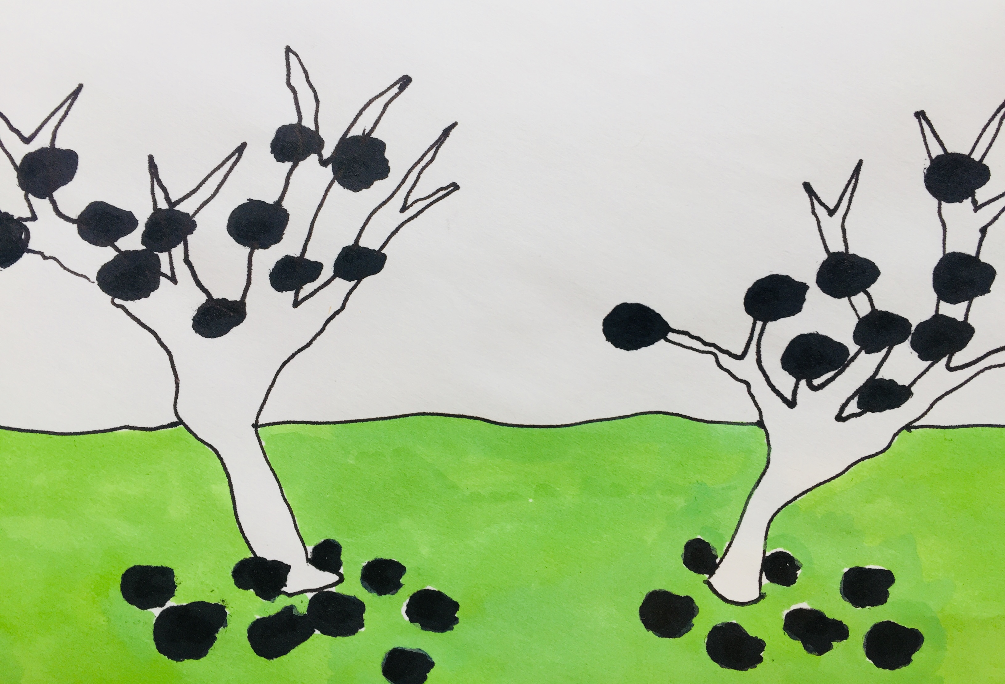 fruit trees drawing black fruit
