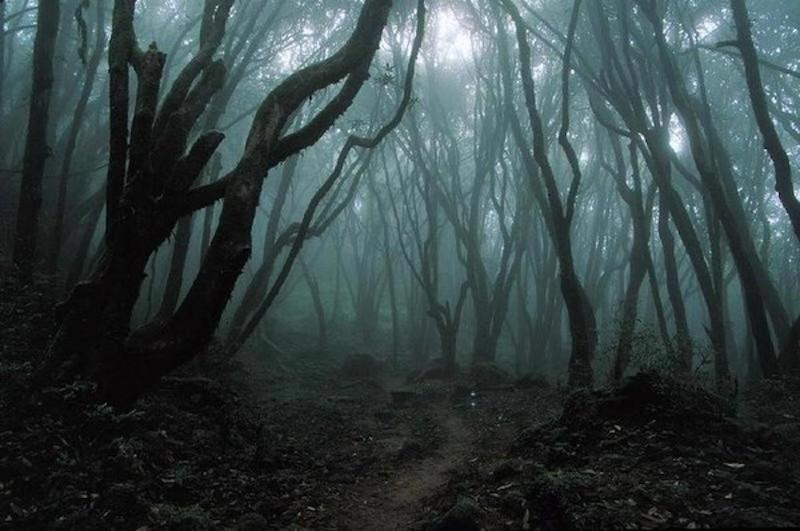 Scared of Woods Photo Mirah Lake:Ocean Video Origins