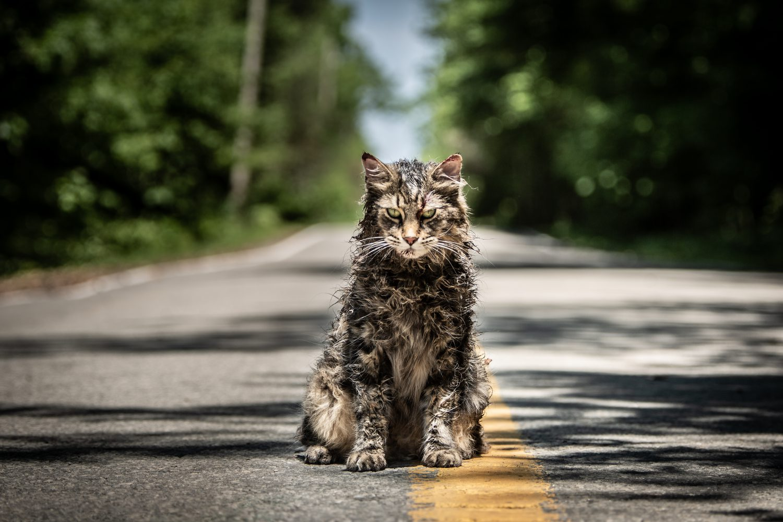 Church, Pet Sematary, Cat, Stephen King