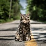 Church, Pet Sematary, Cat, Stephen King