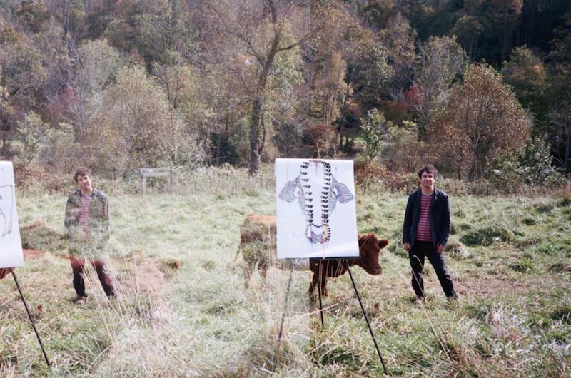 avey tare cows on hourglass pond saturdays again new album tour dates