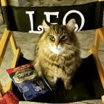 Leo the Cat, star of Pet Sematary