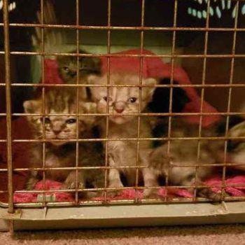 sister hazel kittens tour bus