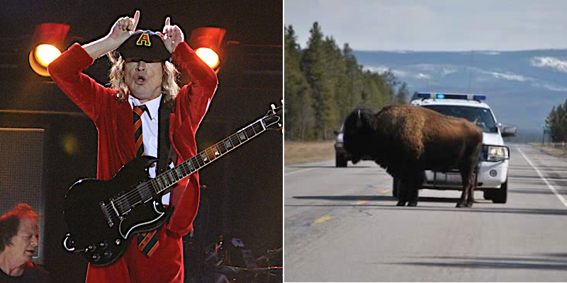 AC/DC music herds bison off highways