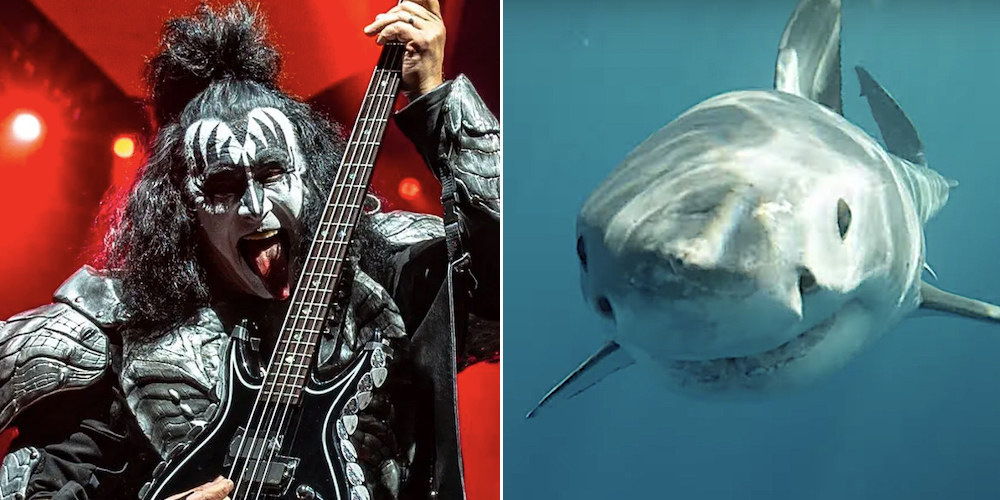 KISS will play a show for an audience of great white sharks