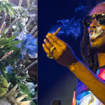 48 joints birthday blunts Weed bouquet (photo via TMZ) and Snoop Dogg (photo by Philip Cosores)