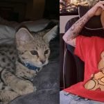 Justin Bieber with his exotic cats Sushi and Tuna