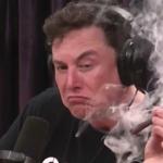Elon Musk Coronavirus Tesla Factory Fremont COVID-19 Cases