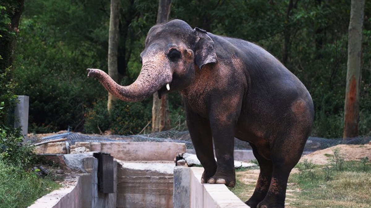 """Cher is escorting """"the world's loneliest elephant"""" to a Cambodian sanctuary"""