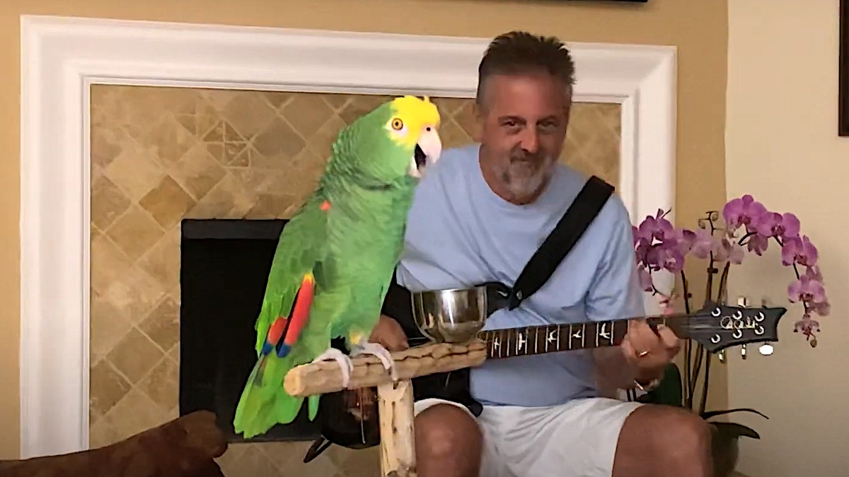 Parrot singing along to Led Zeppelin, Van Halen, GN'R, and more has the voice of an angel: Watch