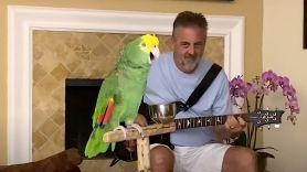 Parrot Sings Rock Classics
