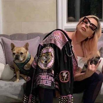 Lady Gaga with her bulldogs